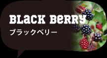 小さいふポキート ブラックベリー